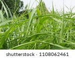 green leaves plant natural... | Shutterstock . vector #1108062461