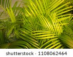 green leaves plant natural... | Shutterstock . vector #1108062464