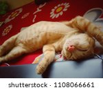 cats are sleeping. | Shutterstock . vector #1108066661