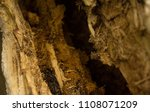 void in a rotten tree close up | Shutterstock . vector #1108071209