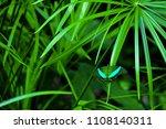 Beautiful Butterfly Sitting On...