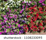 big flowerbed with many tulips... | Shutterstock . vector #1108233095
