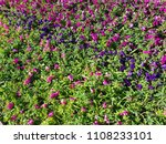 big flowerbed with many tulips... | Shutterstock . vector #1108233101