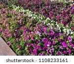 landscape view of a beautiful... | Shutterstock . vector #1108233161