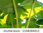 banana leaf green tropical... | Shutterstock . vector #1108284011