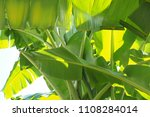 banana leaf green tropical... | Shutterstock . vector #1108284014