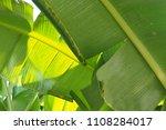 banana leaf green tropical... | Shutterstock . vector #1108284017