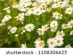 the flowers of the field. honey ...   Shutterstock . vector #1108306625
