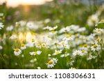 summer chamomile flowers on...   Shutterstock . vector #1108306631