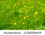colorful wild flowers in an...   Shutterstock . vector #1108306649