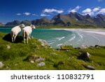 Sheep farm on picturesque Lofoten islands in Norway - stock photo