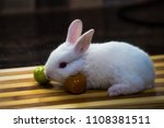 rabbit and its beauty | Shutterstock . vector #1108381511
