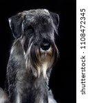 mittelschnauzer dog  isolated ... | Shutterstock . vector #1108472345