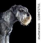 mittelschnauzer dog  isolated ... | Shutterstock . vector #1108472711