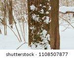 Tree Trunk Birch  On It Moss...