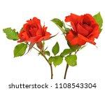 rose flower on a white... | Shutterstock . vector #1108543304