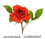 rose flower on a white... | Shutterstock . vector #1108543307