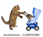 The Caring Cat Pushes A Blue...