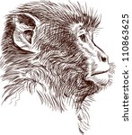 monkey head | Shutterstock .eps vector #110863625