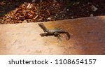 small lizard on a stone | Shutterstock . vector #1108654157