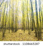 beautiful autumn forest in the... | Shutterstock . vector #1108665287