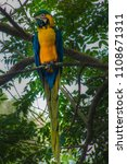Single Macaw On A Branch