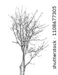 the branches of trees and trees ...   Shutterstock . vector #1108677305
