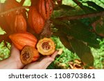 natural cacao farm background.... | Shutterstock . vector #1108703861