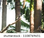 focus the little magpie with...   Shutterstock . vector #1108769651