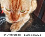 close up. wild cats rest on the ... | Shutterstock . vector #1108886321