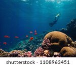 beautiful coral reef and a... | Shutterstock . vector #1108963451