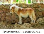 cute of brown mini dwarf horse... | Shutterstock . vector #1108970711