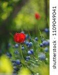 tulips on the flowerbed in... | Shutterstock . vector #1109049041
