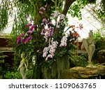 orchids flower  orchids closed... | Shutterstock . vector #1109063765
