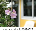 orchid flowers with blurred... | Shutterstock . vector #1109076527