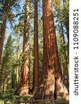 mariposa grove yosemite ... | Shutterstock . vector #1109088251