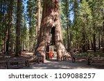 mariposa grove yosemite ... | Shutterstock . vector #1109088257
