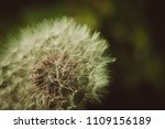 close up of a cap of white... | Shutterstock . vector #1109156189