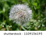 close up of a cap of white... | Shutterstock . vector #1109156195