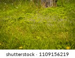 spring little flowers of blue... | Shutterstock . vector #1109156219