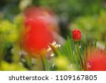 tulips on the flowerbed in... | Shutterstock . vector #1109167805