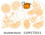 ink hand drawn set of orange... | Shutterstock .eps vector #1109172011