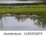 crocodile in the water | Shutterstock . vector #1109292875