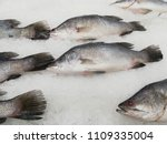fresh fishes giant perch ... | Shutterstock . vector #1109335004