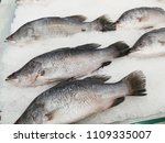 fresh fishes giant perch ... | Shutterstock . vector #1109335007
