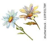 wildflower daisy. floral...   Shutterstock . vector #1109351789