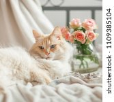beautiful cat with blue eyes... | Shutterstock . vector #1109385104