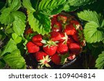 Fresh Homegrown Strawberries In ...