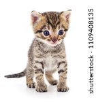 small brown kitten isolated on... | Shutterstock . vector #1109408135