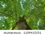 spring landscape of trees... | Shutterstock . vector #1109415251